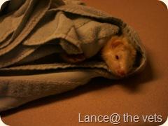 lance the ferret