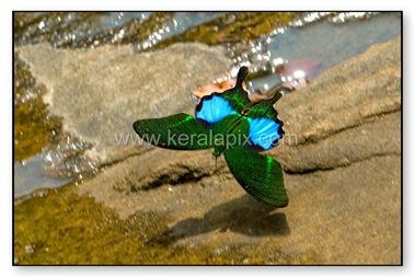 TMKH_048_thommankuth_kerala_keralapix.com_DSC0050
