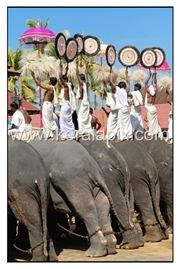 TPRA_024_DSC0144_www.keralapix.com_kerala