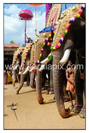 TPRA_034_DSC0184_www.keralapix.com_kerala
