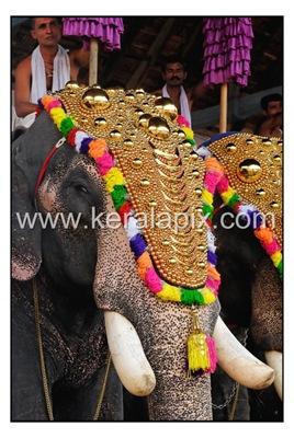 TPRA_001_DSC0004_www.keralapix.com_kerala