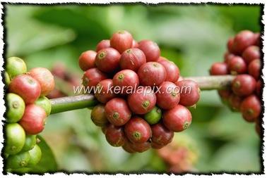 NLPY_034_www.keralapix.com_DSC0091