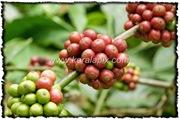 NLPY_035_www.keralapix.com_DSC0095