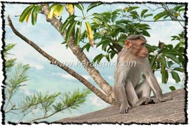 NLPY_060_www.keralapix.com_DSC0124