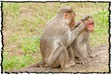 NLPY_062_www.keralapix.com_DSC0129