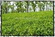 NLPY_041_www.keralapix.com_DSC0106