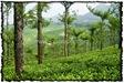 NLPY_049_www.keralapix.com_DSC0121