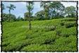 NLPY_056_www.keralapix.com_DSC0275