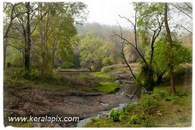 PCM_004_DSC0015-2_ Parambikulam_www.keralapix.com