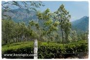 PCM_017_DSC0044-2_Marayoor_Munnar_www.keralapix.com
