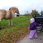 Silje går med gåvognen, og synes hestene er meget spændende at se på