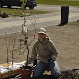 Sidsel planter vores første busk - en troldhassel!