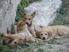 095 - Perros en el Ágora romana.JPG