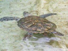 Turtle Point