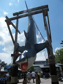420 - Jaws.JPG