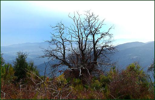 Ascenso a Les Agudes desde Fontmartina por el GR 5-2 5954