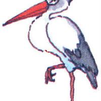 Aves (33).jpg