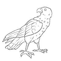 Aves (37).jpg