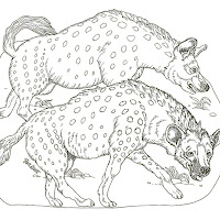 Mamíferos (151).jpg