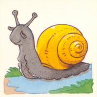 Moluscos (1).jpg