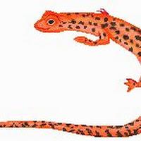 Reptiles (21).jpg