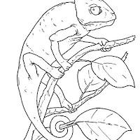Reptiles (4).jpg