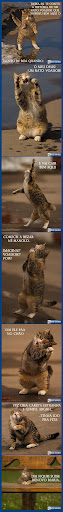 Topico de imagens toscas e/ou insanas - Página 15 Vivonarederatovoador