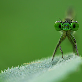 MY POSE by Anggi Gunawan - Animals Insects & Spiders