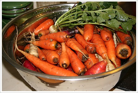 [carrot-parsnip-harvest - sustainable eats[2].jpg]