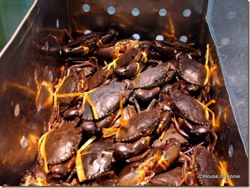 live crabs at Rock Road Seafood