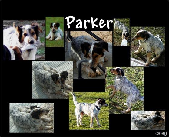 Parker  LA-12