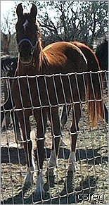 feb 21  (10) ALI's Horses and Property 041