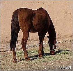feb 21  (10) ALI's Horses and Property 067