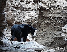 Gargoyle Canyon Tight Spot Ledge 6