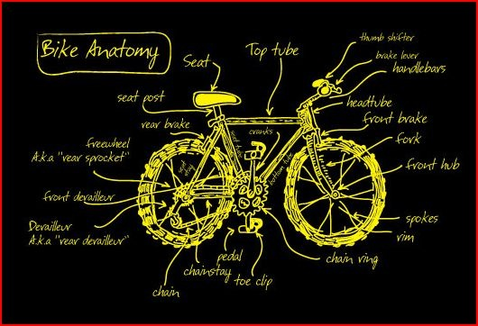bike anatomy