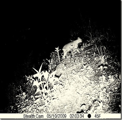 deer cam upper trail may 14 450