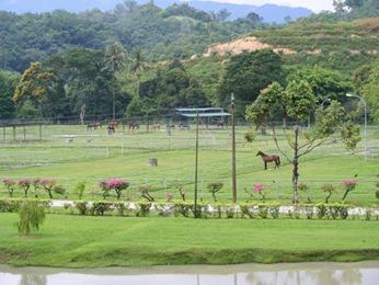 horsefarm2
