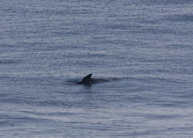 waar leven grijzedolfijnen