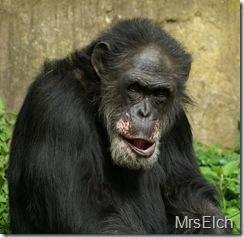 """Schönes Bild vom """"Alten Affen"""", aufgenommen von meiner Frau"""