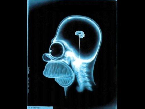 Cerveau d'Homer Simpson