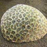 Eine Koralle am Strand