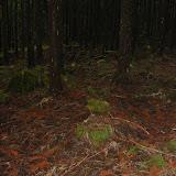 Der Waldboden im dunklen und unheimlichen stillen Nadel-Urwald
