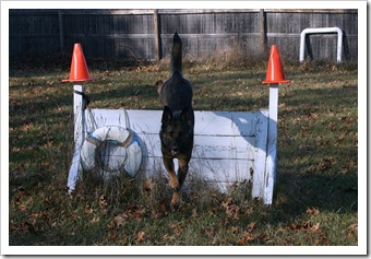 2009.11.17 Dogs in Yard-6