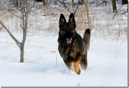 2011.1.28 Brita.Jake snow dogs-14a
