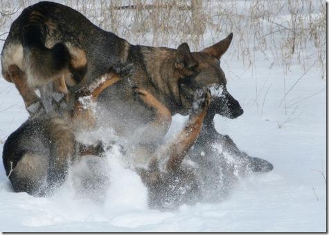 2011.1.28 Brita.Jake snow dogs-17