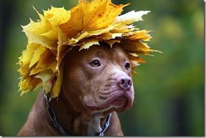 b akiranuse perro hojas