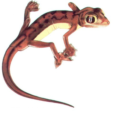 a paper on the web footed gecko Tumblr is a place to express yourself, discover yourself, and bond over the stuff you love it's where your interests connect you with your people.