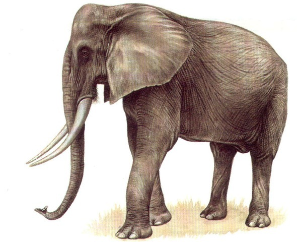 85161664 as well Rutundu log cabins 4 Of 7 furthermore OrnateFlawedAfricanclawedfrog likewise Elephants And Hyraces also FewDismalAfricangoldencat. on small african