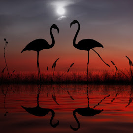 You need to learn to dance my dear! by George Leontaras - Digital Art Animals ( orange, hellas, reflection, moon, greece, fine art, lake, manipulation, erget, volos, digital art, glart, night, sunrise, dance, photoshop )
