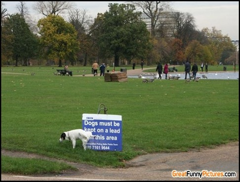 4409-Dog-must-be-kept-on-a-lead-in-the-area